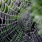 Dream Interpretation Spiders